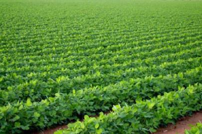 البنك الزراعي يعلن سياسة تمويلية جديدة.. ما هي ملامحها؟