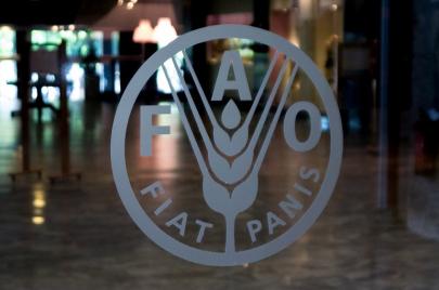 الفاو تدشن حملة توزيع بذور خضروات للمناطق المتضررة بولاية سنار